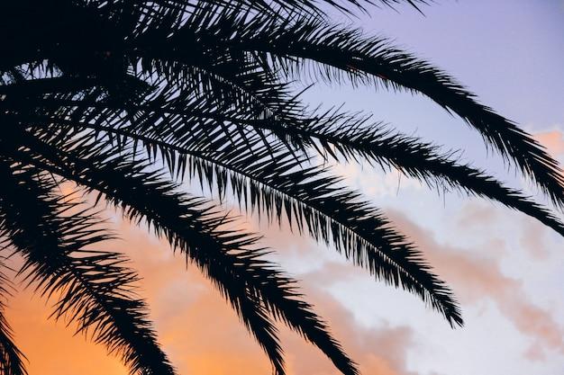 Pôr do sol tropical e palma deixa fundo vívido