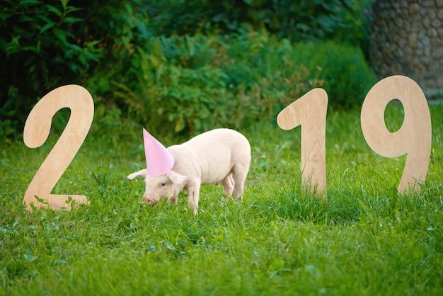Porco cor-de-rosa que come a grama, estando perto dos numerais de madeira de 2019 no jardim.
