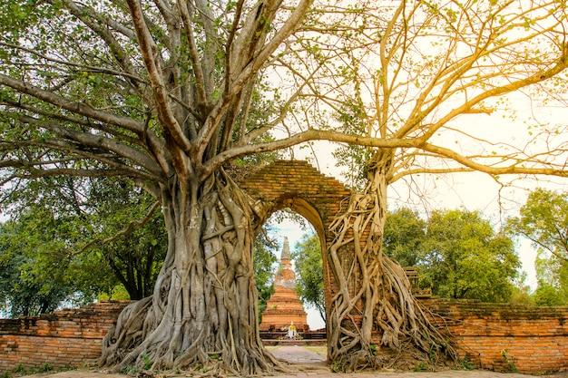 Porta antiga no templo de wat phra ngam, ayutthaya, tailândia.