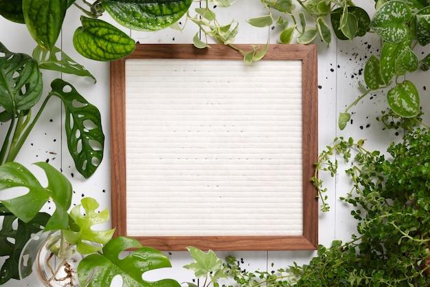 Porta-retratos em branco com fundo de planta