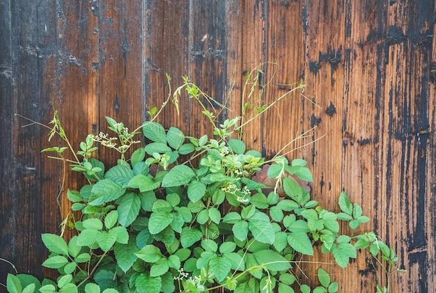Portas antigas e plantas verdes