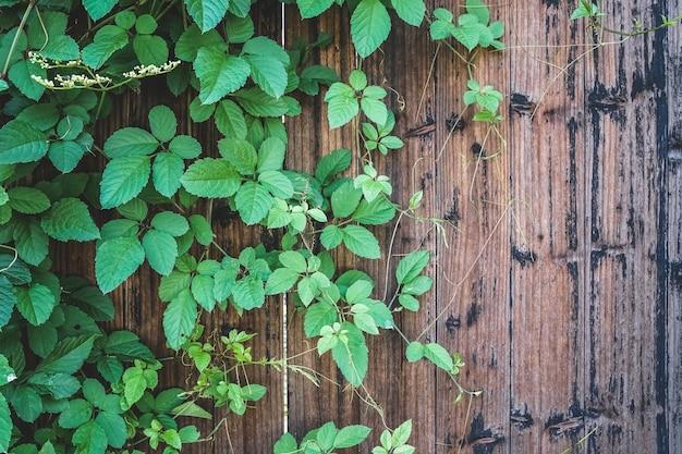 Portas de madeira vintage e fundos de plantas verdes