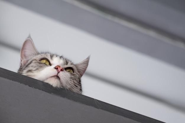 Portraif do jovem gato escondido sob o teto e observa o que está acontecendo