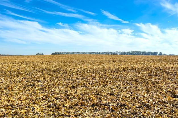 Pós-colheita de resíduos de milho no campo antes de serem processados no solo como orgânicos