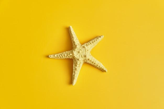 Posição plana da bela estrela do mar inteira