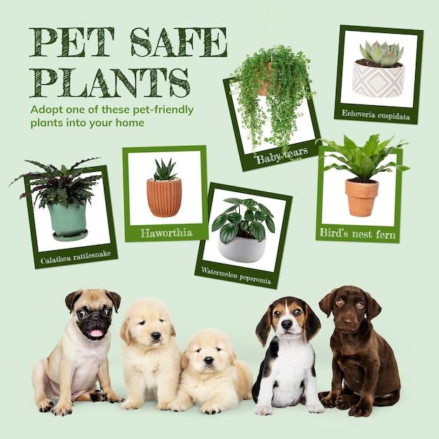 Postagem de plantas seguras para animais de estimação nas redes sociais