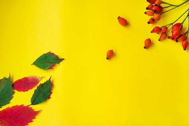 Postal de outono com roseira brava em um fundo amarelo. camada plana, layout