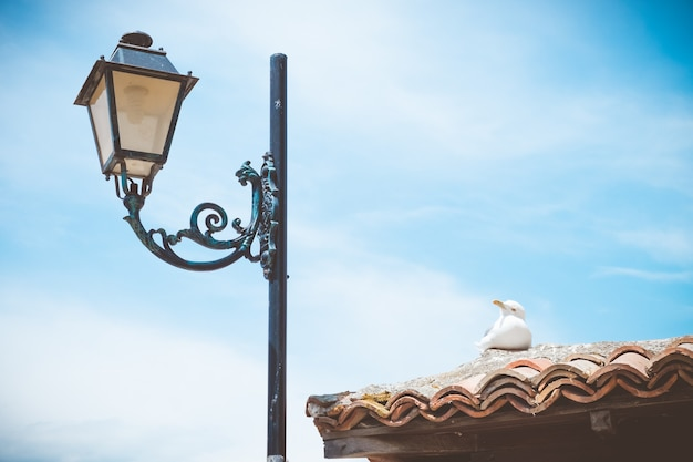 Poste de luz e gaivota