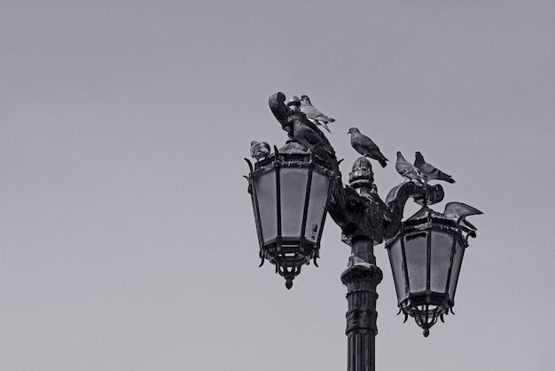 Poste de rua vintage monocromático com um bando de pombos empoleirados