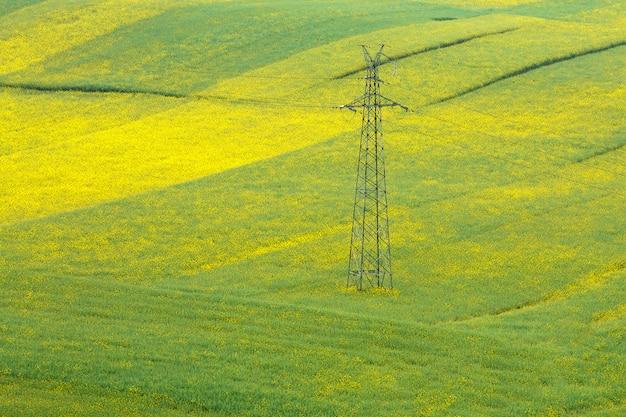Postes de alta tensão no campo de flores de mostarda.