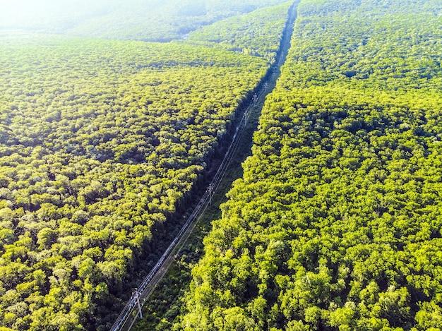 Postes elétricos no meio de uma densa floresta verde