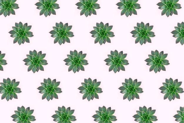 Postura plana de belo padrão de suculentas verdes isoladas em rosa