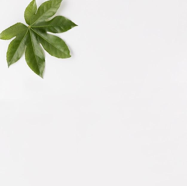 Postura plana de cosméticos naturais com folhas
