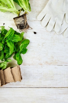 Postura plana de ferramentas de jardinagem, manjericão, vaso de flores ecológico, solo na mesa de madeira branca.
