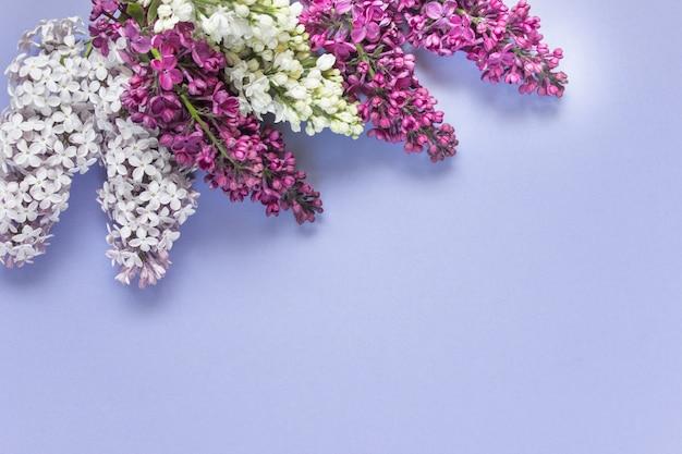 Postura plana de flores lilás roxas rosa
