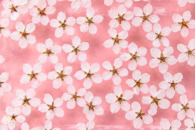Postura plana de flutuantes flores brancas cereja selvagens na superfície da água, fundo rosa pastel