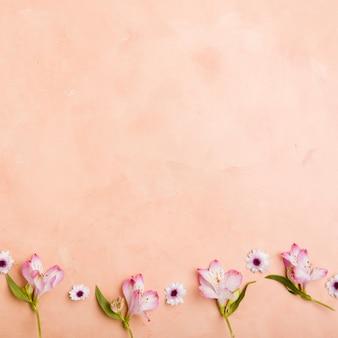 Postura plana de lindas orquídeas e margaridas da primavera