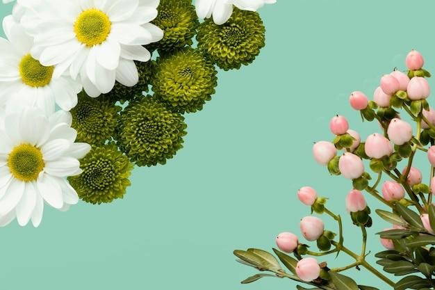 Postura plana de margaridas e botões de flores da primavera