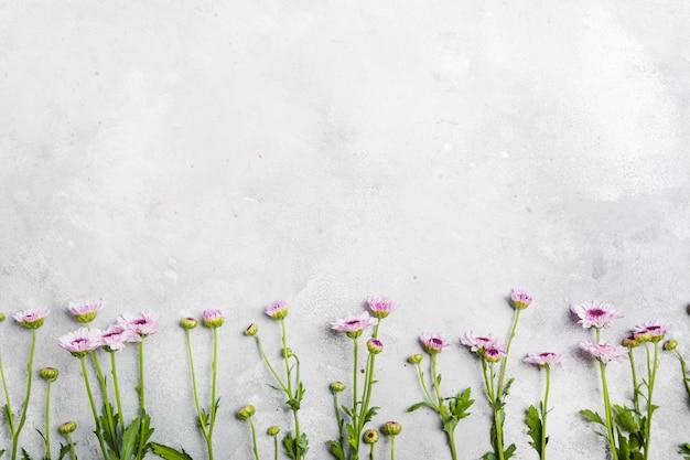 Postura plana de margaridas lindas da primavera com espaço de cópia