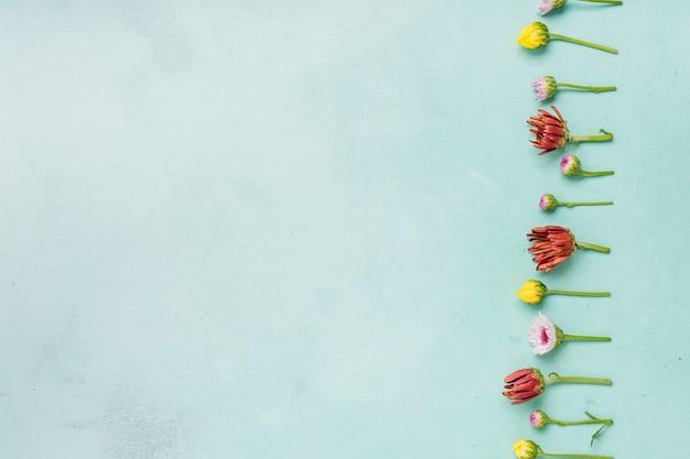 Postura plana de margaridas primavera e rosas com espaço de cópia