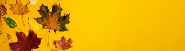 Postura plana de natureza outono colorido deixa no banner de fundo amarelo