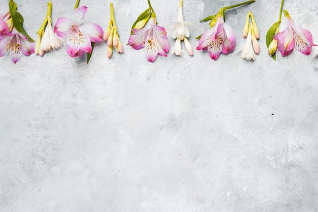 Postura plana de orquídeas de primavera com espaço de cópia