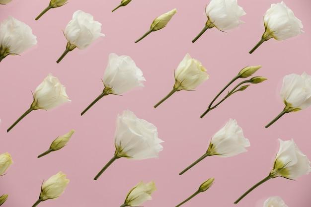 Postura plana de rosas da primavera