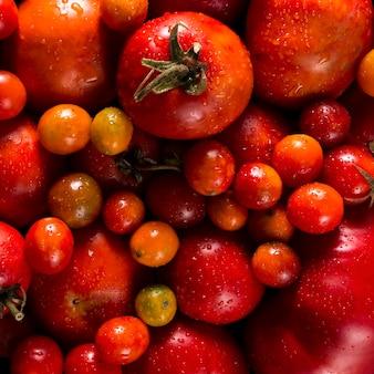 Postura plana de tomates de outono