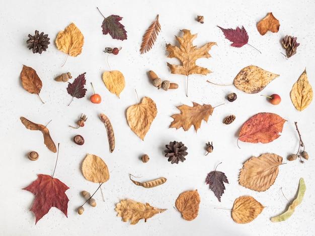 Postura plana de várias sementes e folhas de árvores selvagens isoladas em um fundo de textura branco. fundo de botânica de outono. vista do topo