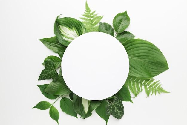 Postura plana do conceito de quadro de folhas com espaço de cópia