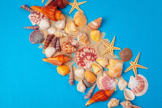 Postura plana. vista do topo. quadro de conchas de vários tipos, sobre um fundo azul.