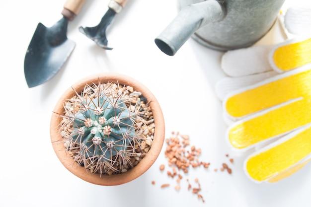Pot of cactus e ferramentas de jardim isoladas no fundo branco