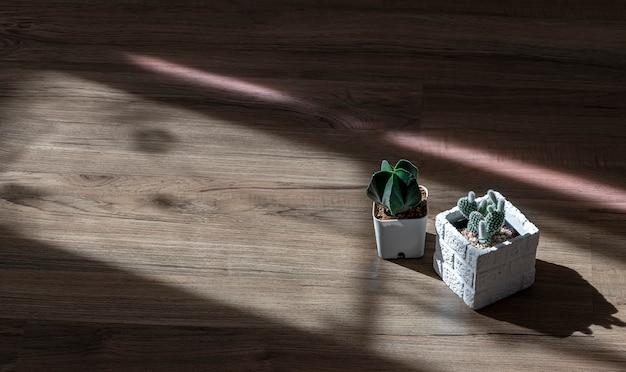 Pote branco de cacto no chão de madeira.