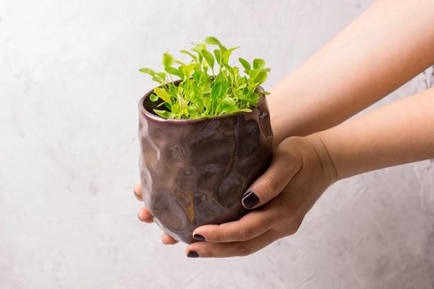 Pote com brotos verdes frescos nas mãos femininas