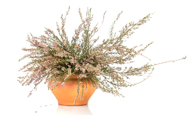 Pote com flores de urze secas em um fundo branco.