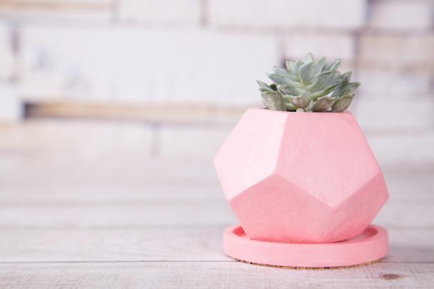 Pote de gesso rosa com planta suculenta