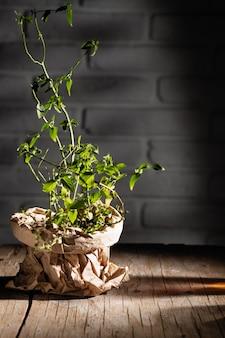 Pote de hortelã embalado em papel ofício em uma velha mesa de madeira à noite luz dura