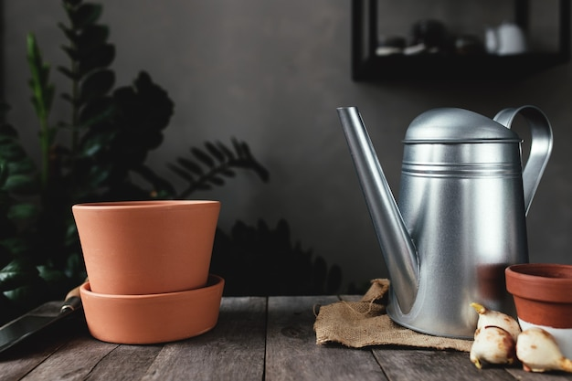 Potes de cerâmica em uma velha mesa de madeira cinza, bulbos de tulipa, regador. foto de alta qualidade