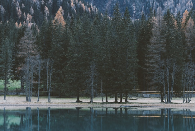 Pouca luz do corpo de água calmo perto de árvores