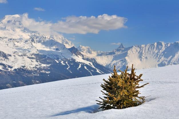 Pouco abeto na neve