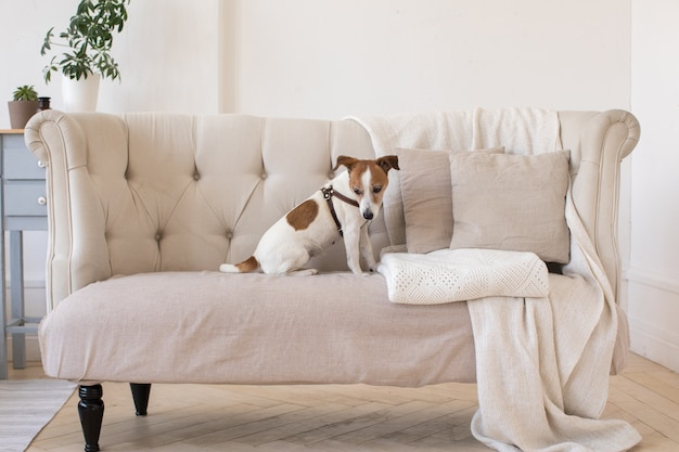 Pouco cachorrinho no sofá