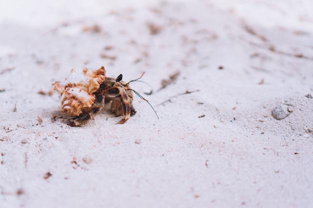 Pouco caranguejo bonito na praia pelo oceano