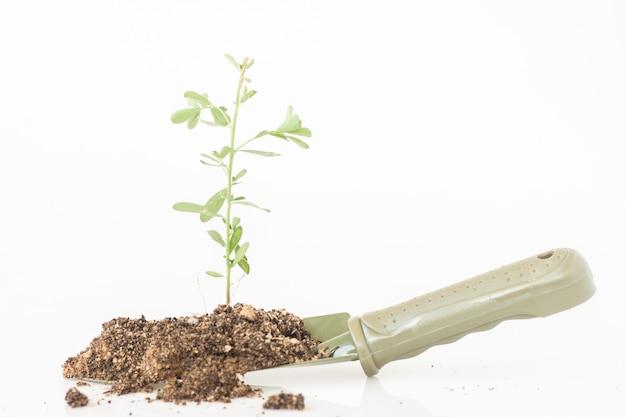 Pouco três crescimento pelo solo e areia na pá de metal verde