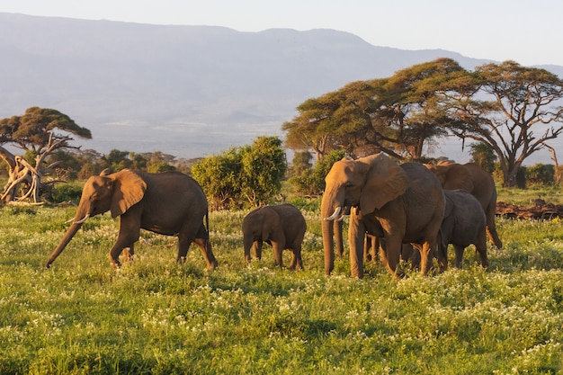 Poucos elefantes perto da montanha kilimanjaro