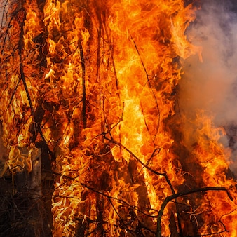 Praça do fogo, árvore em chamas wildfire na cor vermelha e laranja à noite.