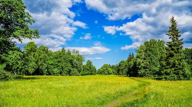 Prado alpino, paisagem atmosférica de natureza majestosa. paisagem cênica. maravilhosa paisagem selvagem.