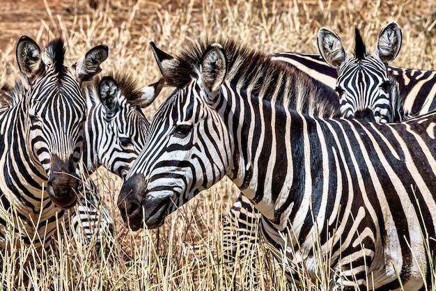 Prado coberto de grama cercado por zebras sob a luz do sol durante o dia