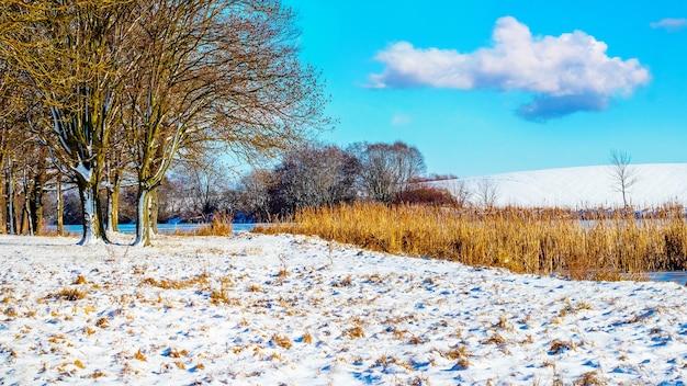 Prado coberto de neve na floresta em tempo ensolarado