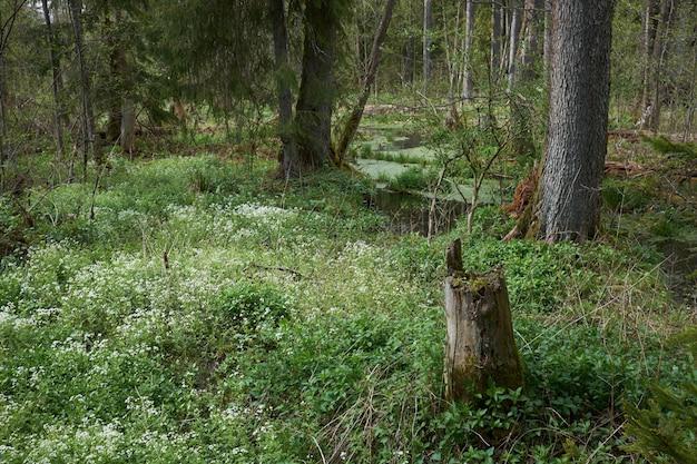 Prado com lindas flores brancas entre os pântanos