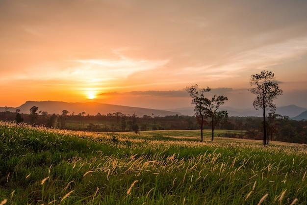 Prado da grama do por do sol na colina da inclinação e na montanha da árvore da silhueta